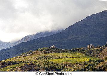Hillside vineyards with white house in Crimea - A hillside...