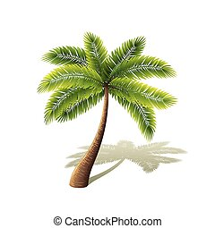 Palm tree isolated on white vector - Palm tree isolated on...