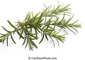 Rosemary. - Rosemary twig on the isolated white background.