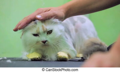 Human Hand Stroking Cat - Slow motion - close-up shot of a...