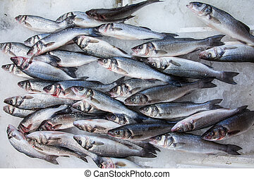 fresh labrax or seabass on ice - Labrax or seabass on a fish...