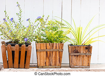 Small pot plant with wooden fence.
