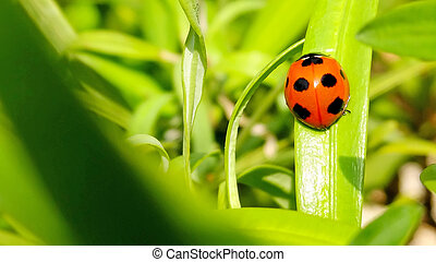 ladybug on green nature background