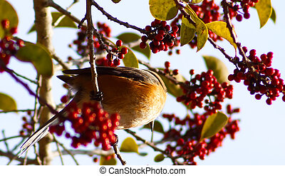 A small bird with a red tree in the garden,vintage nature