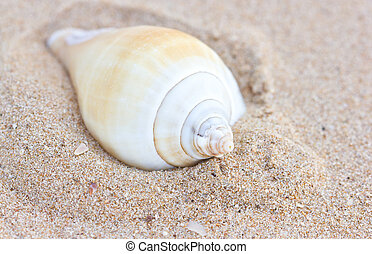Sea shell on sand.