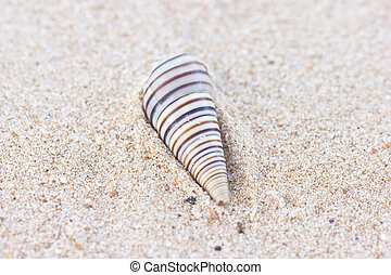 Spiral sea shell on sand.