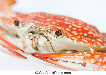 Close up of Blue crab Scientific Name : Portunus pelagicus...