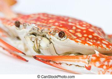 Close up of Blue crab. (Scientific Name : Portunus...