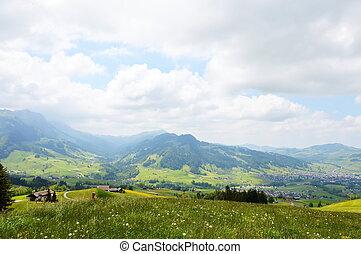 grass flower field in Appenzell Switzerland