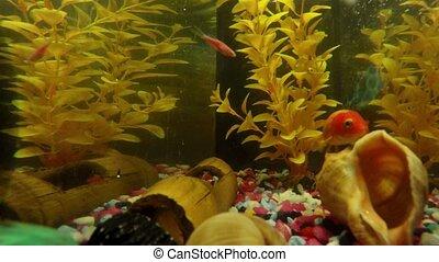 Time Lapse of Aquarium Fish Tank