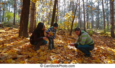 Young Family With a Child Picking Up Yellow Leaves In Autumn...