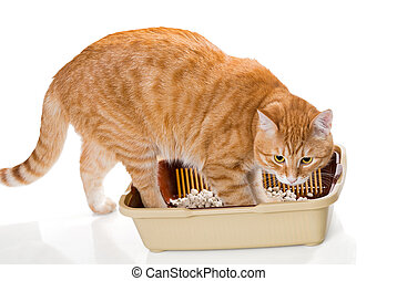 Cat and plastic toilet with filler, isolated on white