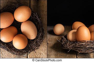 compilación, de, fresco, huevos, imágenes, en,...
