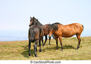 horses - Copule of horses in the late summer season on the...