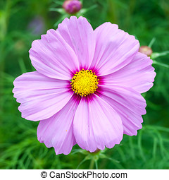 beautiful flower - flower in a field of flowers