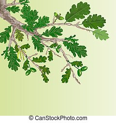 Oak branch with leaves and acorns spring background vector...