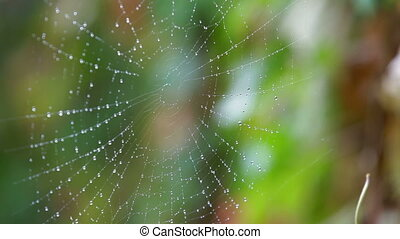 Rain drops shining on a spider web closeup