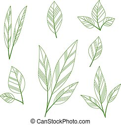 Stylized leaves - Set of sketches leaves on a white. Vector...
