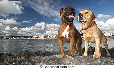 dog and sea - photograph of a dog in majorca coast