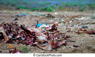 Illegal dumping of organic wast from meat factory