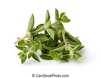 oregano - Fresh oregano isolated on white background