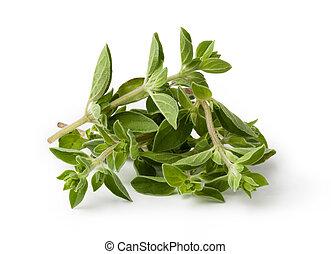 oregano - Fresh oregano isolated on white background