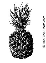 Pineapple - Hand - drawn pineapple on white background
