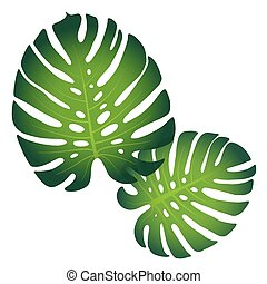Monstera leaves - Pattern with tropical monstera leaves