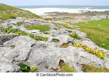 The Burren - Grikes and clints along the limestone pavement...