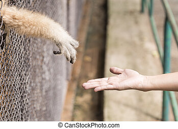 hand - To alleviate the animals were confined to freedom