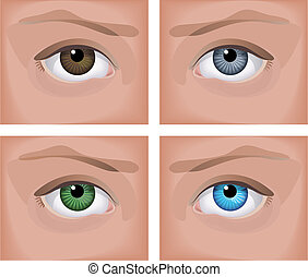eyes - Vector illustration - a realistic human eye four...