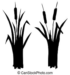 reed - silhouette of reed