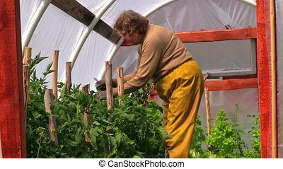 senior woman greenhouse - Senior woman in yellow trousers...