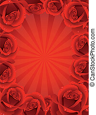 roses - Vector illustration - fine blossoming roses