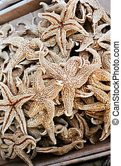 dried starfish in a chinatown medicine shop