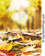 Colorful background of autumn leaves - Bright autumn...