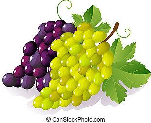 grape - Vector illustration -  ripe grape bunch