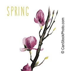 Watercolor of Magnolia flowers - beautiful illustration Hand...