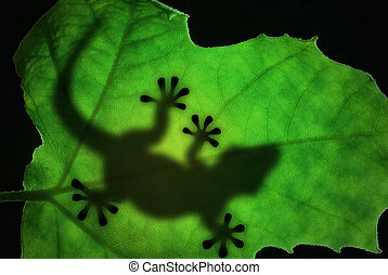 Lizard silhouette in the leaf - Lizard backlight silhouette...