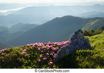 Flowers in the mountains - Summer landscape in the morning....