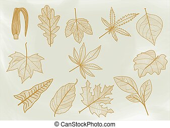 Line leaves - Set of sheets of different shapes, size, edges...