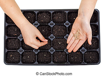 Young hands sowing vegetable seeds in germination tray -...