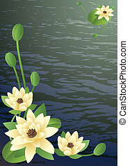 blossoming lilies - Vector illustration - a pond with fine...