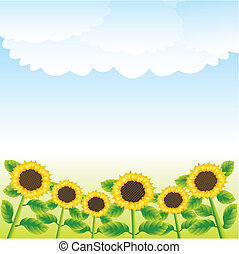 sunflowers - vector Illustration Rural landscape with...