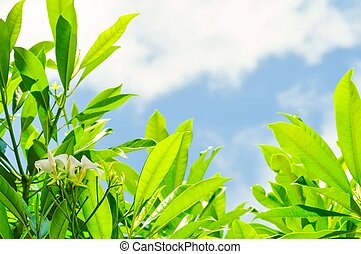tree,sky,leaf,flower and clound background - tree,sky,green...