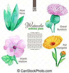 Set of watercolor madicinal plants such as great burdock,...