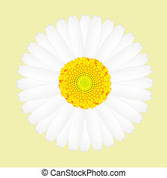 White daisy flower isolated on yellow background