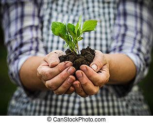 植物, 女, 彼女, 若い, 緑, 保有物, 手