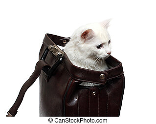 white cat in brown case