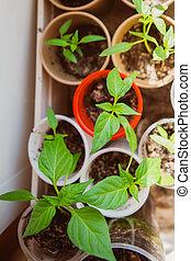 農業, 播種, 植物, 種子, 生長, 概念,